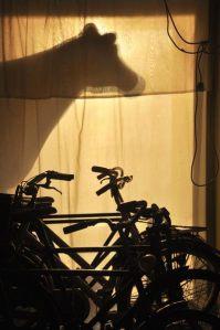 Fiets Parkeren @Tortuga Galerie - Bicicletas atras da vitrine da Galeria Tortuga (nossa habitaçao coletiva em Amsterdam)