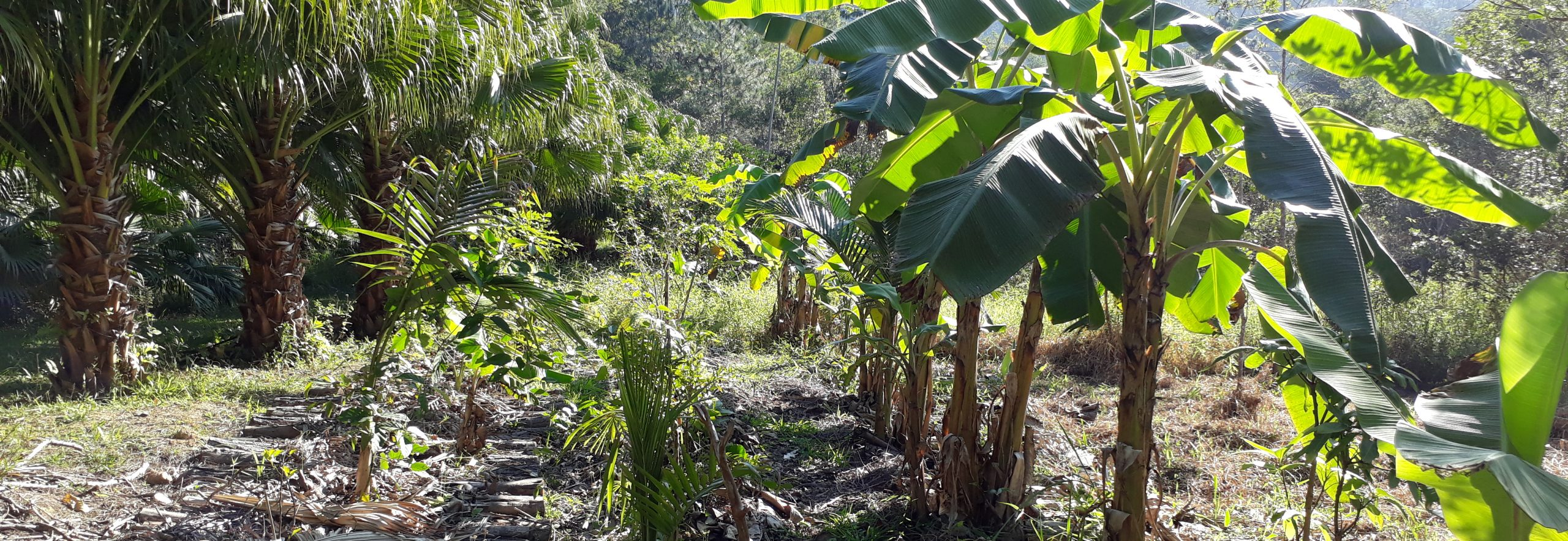 Nova Oikos Permacultura e Decrescimento - Endereço: Camboriú, Santa Catarina \ Contato: E-mail: nova.oikos@gmail.com